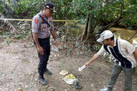 Warga Desa Panca Jaya tewas dimangsa buaya