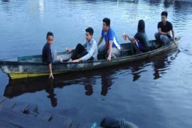 Masyarakat resah buaya Sungai Mentaya kembali muncul