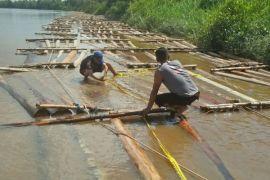 Polda Kalteng kembali temukan ratusan kayu ilegal