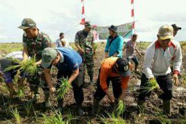Pemkab Seruyan tanam padi perdana 2018