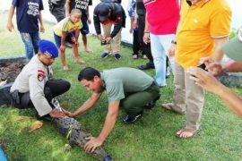 Buaya makan umpan pancing warga Sampit