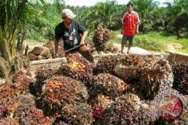 Kotim berharap regulasi perkebunan perhatikan nasib daerah