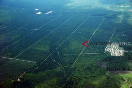 Barut remajakan kebun kelapa sawit seluas 900 hektare