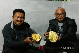 Pantas saja durian khas Kotim makin diburu, ternyata ini alasannya