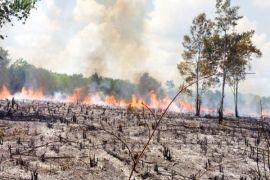 Polisi selidiki dugaan pembakaran lahan di Palangka Raya