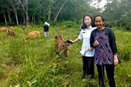 Anggota DPRD Gumas salurkan bantuan ternak sapi