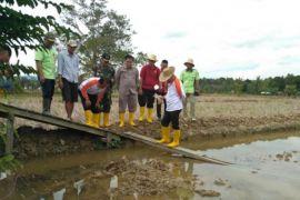 DPRD dukung optimalisasi sawah organik pola mina padi