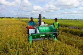 Pengembangan kawasan agropolitan tingkatkan kesejahteraan warga Sukamara