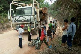 Tragis, konsultan ini tewas mengenaskan dihantam truk penuh kayu gelondongan
