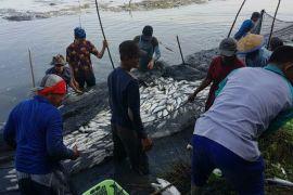 Pemkab imbau nelayan Kotim tak tergantung pada hasil tangkap
