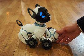 Robot anjing ini mampu kenali 100 wajah manusia