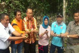 Disita di Surabaya, puluhan burung ini dikembalikan ke hutan Kobar