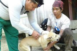 1.063 hewan peliharaan di Barito Utara diberi vaksin rabies