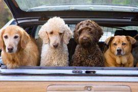 Cara aman liburan bersama hewan peliharaan