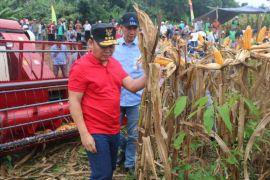 Gubernur Kalteng janji tambah mesin panen jagung
