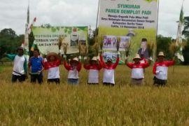 Inovasi pertanian harus mampu tingkatkan produksi padi Barito Timur