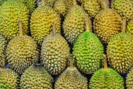 Ternyata biji durian mengandung protein baik untuk bayi