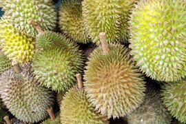 Takaran khusus makan durian dari ahli nutrisi