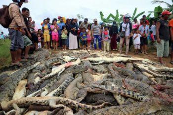 Pembantaian Ratusan Buaya
