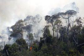Kebakaran Hutan Tangkapan Air/Joko Sulistyo