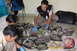 BKIPM Tanjungpinang Gagalkan Penyelundupan 439 Tempurung Penyu Bintan