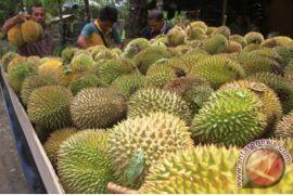Ribuan wisatawan meriahkan festival durian Bintan