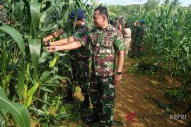 TNI AL Dabosingkep panen jagung