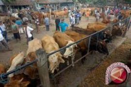 Kebutuhan hewan kurban di Karimun 583 ekor