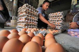 Harga telur tembus Rp45 ribu per papan
