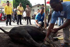 Golkar Karimun bagikan 350 kantong daging kurban
