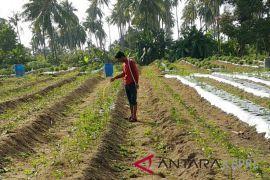 Petani Bintan kekurangan 334 ton pupuk subsidi