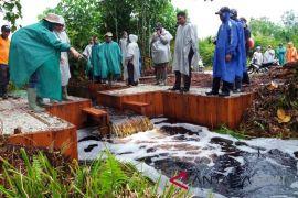 800 hektare lahan gambut Riau direstorasi