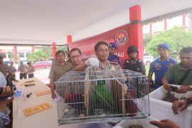 Penyelundup hewan yang dilindungi ditangkap