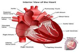Dokter : Waspadai Aritmia yang gejalanya jantung berdebar