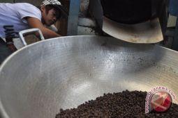 Panen kopi berlangsung, produksi kopi luwak digenjot