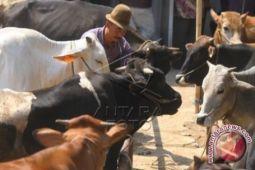 Pemkot Bandarlampung periksa kesehatan hewan kurban