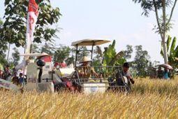 Produksi Padi Lampung Timur Capai 591.000 Ton