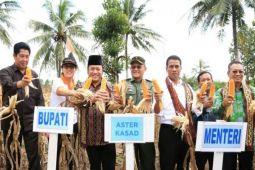 Menteri Pertanian Bantu 495.000 Ton Benih Jagung