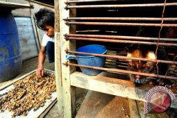 Kopi Luwak Lampung Masih Punya Aroma