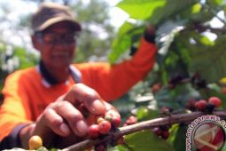 Harga Hasil Perkebunan Lampung Turun