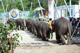 Gajah Lampung siap sambut kirab obor AG