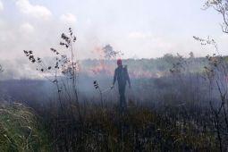 BMKG : 11 titik api di Lampung