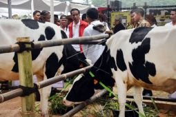Presiden Jokowi Pamerkan Hasil Beternak Domba