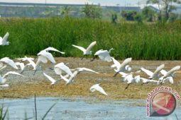 Burung ditembakin, KLHK didesak segera berikan tindakan hukum