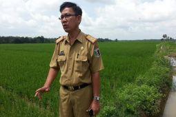 Mentan Akan Panen Padi Di Lampung Timur