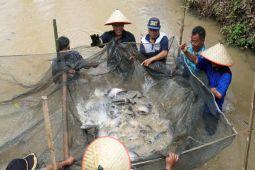 Bupati Optimistis Daerahnya Jadi Sentra Ikan Tawar