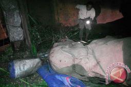Truk Pembawa Dua Gajah TNWK Terguling