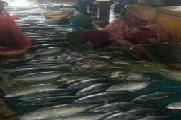 Stok Ikan Melimpah Di Lampung Timur