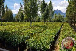 Balitbangtan siap salurkan benih tanaman industri