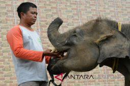 WWF akan perbaiki kolam gajah Way Kambas